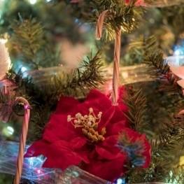 Festa de Nadal a Sant Miquel de Fluvià