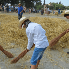 Feast of the harvest and the beat of Avià