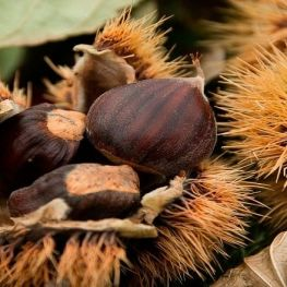 Chestnut Fair of Viladrau
