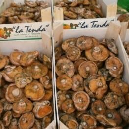 Feria del Rovelló los Reguers en Tortosa