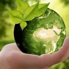 Fira ecològica a Els Pallaresos
