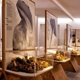 Inauguration of the second floor of the Montmajor Mushroom Museum