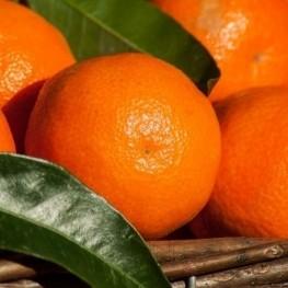 Jornades gastronòmiques de la clementina d'Alcanar