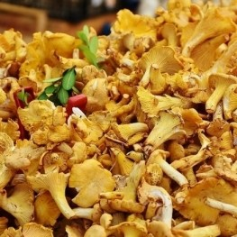 Gastronomic Days of the Mushroom in Terrassa