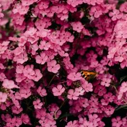 Montclar Floreix