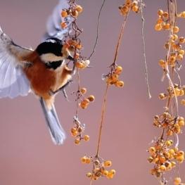 Petits ornitòlegs a MónNatura Delta de l'Ebre