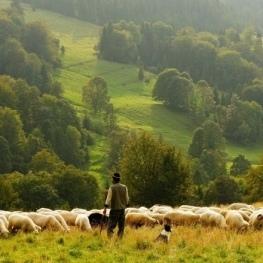 Documentary screening 'Women shepherds in the Penedès'…