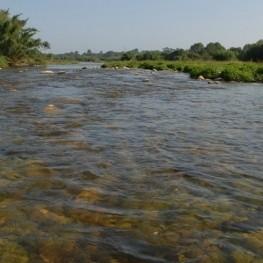 Ruta guiada pel riu Francolí