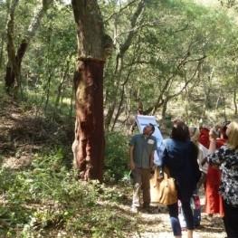 Setmana del bosc a Sant Celoni