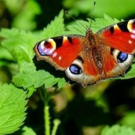 Setmana del Medi Ambient a Prats de Lluçanès