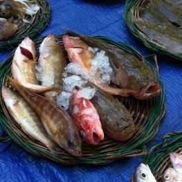 Sung fish auction in El Masnou