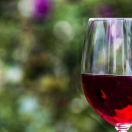 Guided visit to the Can Rovira de Fogars vineyard