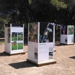 Guided tour and exhibition of Orchids in the Pineda del Remolar…