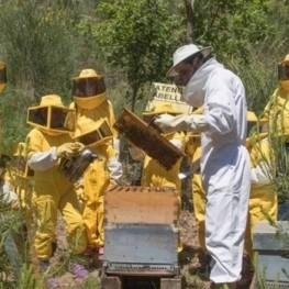 Nous avons visité les abeilles à Viladecans