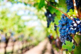 Fiesta de la Vendimia y Muestra de Vinos en Sitges