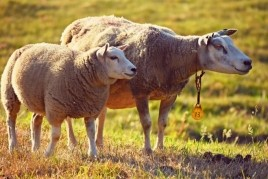 Cap de setmana ramader a Setcases