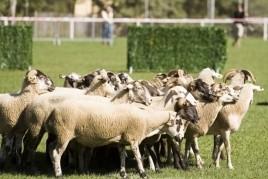 Concurs de Gossos d'Atura de la Vall de Ribes