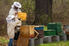 Experiència apiturística a la Vall de Ribes de Freser