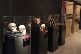 Bones Exhibition at the Museo de la Noguera