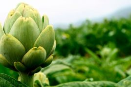 Fiesta and gastronomic Days of the Artichoke and the rice of…