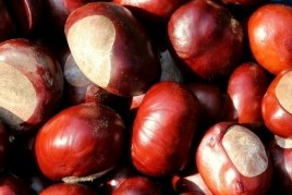 Chestnut Fair in Maçanet de Cabrenys