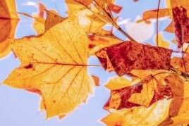 Foire d'automne de San Eloy à Tortosa