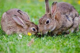 Fira del Conill i l'Artesania de Vilafant