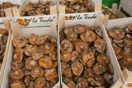 Fira del Rovelló dels Reguers a Tortosa