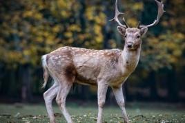 Profitez du beuglement du cerf à MónNatura Pirineos