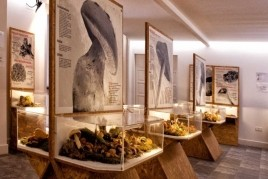 Inauguration of the second floor of the Montmajor Mushroom Museum