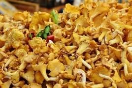 Gastronomic Days of the Mushroom in Terrassa