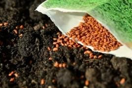 Matinée d'échange de semences à Argençola
