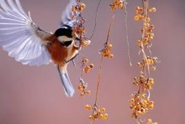 Petits ornithologues à MónNatura Delta de l'Ebre