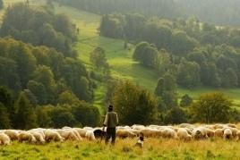 Projection du documentaire 'Femmes bergers dans le Penedès'…