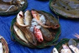 Subasta cantada de pescado en El Masnou