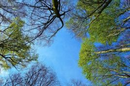 21 de marzo, Día Mundial del Árbol