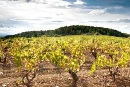 Vinòleum, Mercado del Vino y del Aceite de Font-rubí