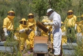 We visited the bees in Viladecans