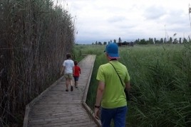 Visits to the natural area of the Acequia Mayor