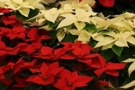 Vive la Navidad en Santa Maria d'Oló
