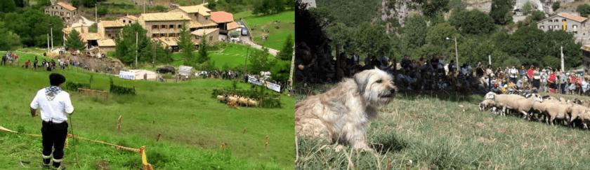 Concurs Internacional de Gossos d'Atura de Castellar de n'Hug