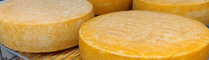 Three award-winning cheese factories that we can not miss Llobregat above