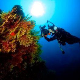 Roses Sub Dive Center