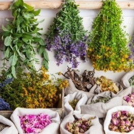 Natural cosmetics and medicinal plants in Catalonia