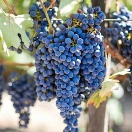 Profitez du vin et de l'oenotourisme en Catalogne