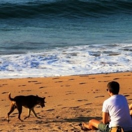 The best beaches in Catalonia to go with dogs