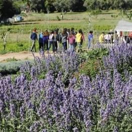Balade entre couleurs et nature dans les Parcs des odeurs de…