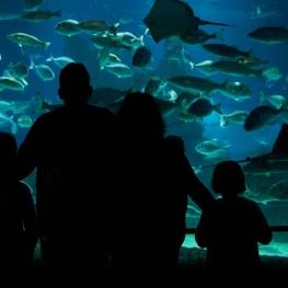 Sorteig: L'Aquàrium de Barcelona