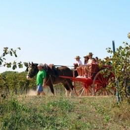 Sorteig: ruta en carro entre vinyes + tast de vins