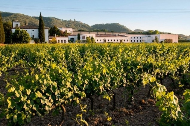 Visit winery & vineyard & tasting of 3 products in Bodegues Sumarroca (La_tierra_moli_coloma)